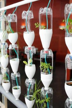 Hydroponics Window Garden Using Recycled Plastic Bottles For More