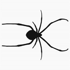 Brown recluse spider, Recluse spider and Spider on Pinterest