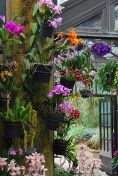 Orchids Are Displayed As Pieces Of Art On The Water Wall In The