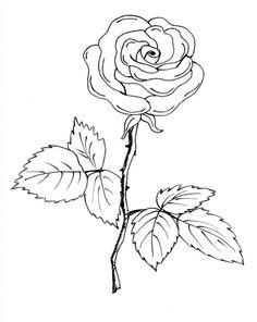Flower Stem Template Black And Whiteblack White Clipart Of