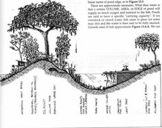 Nine Layers of the Edible Forest Garden (Food Forest
