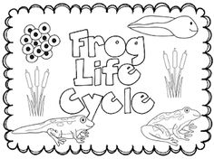 Free Life cycle of a frog printable posters.- awesome