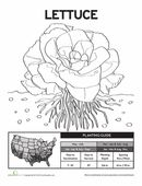 1000+ images about 1st grade life science on Pinterest
