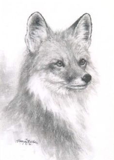1000 Images About Reference Drawing On Pinterest Fox