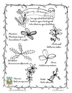 1000+ images about Herbal Identification on Pinterest