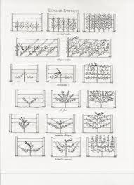 1000+ images about Espalier Fruit Tree Training Methods on