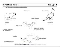 Sea Animals Names Cakepins