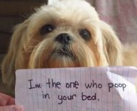 Dogs Like A Boss on Pinterest | My Name, Dogs and Dog Shaming