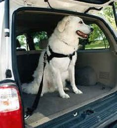 1000 images about Dog Harness and Gear on Pinterest Dog