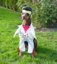 1000+ images about Casino Dog Costumes on Pinterest