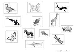 1000+ images about Classification des animaux on Pinterest