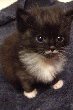 Super Duper Cute Wallpapers Margay Kittens For Sale Serval Savannah Ocelot