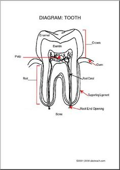 Dental hygiene, Coloring pages for kids and Dental on