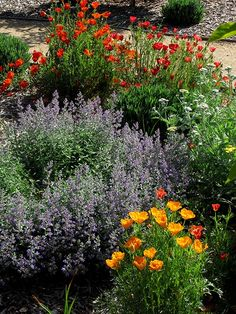 Cottage Garden Landscape Plant Package Northern & Southern