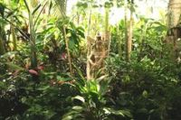 1000+ images about Tropical gardens in temperate climates ...