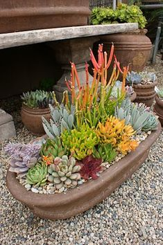 DIY Indoor Outdoor Succulent Garden Ideas Instructions Jardins