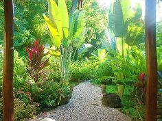 Tropical Garden Design Ideas Harmony In Landscape Design Avalon