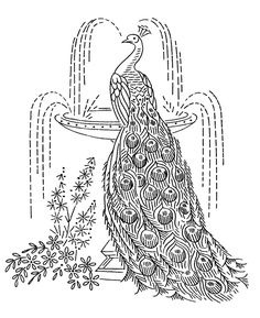 1000+ images about ALL THINGS PEACOCK. on Pinterest