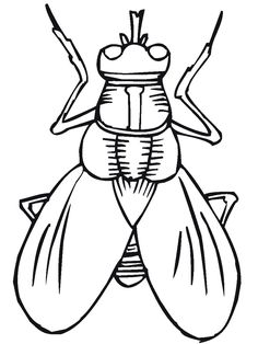 Bug coloring pages....each kid gets two...crayon, water