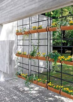 8 Tips For A Hanging Garden Plants That Do Well In A Hanging