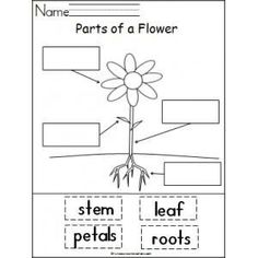 Plant poem! A poem for learning about plants, flowers and