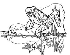 1000+ ideas about Frog Coloring Pages on Pinterest
