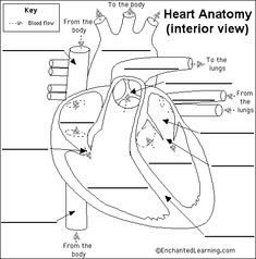 Enchanted Learning ~ Free Heart Anatomy Diagram