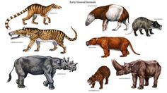 1000 Images About Prehistoric Mammals On Pinterest