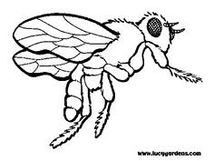 #Georgia State Symbol Coloring Page by Crayola. Print or