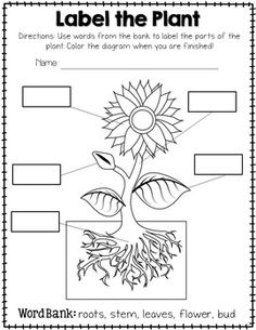Parts of a plant, Plants and Worksheets on Pinterest