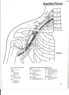 Upper Extremity: E-STIM for shoulder subluxation, scapula