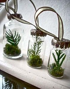 20 Ideas For Home Decorating With Glass Plant Terrariums Unique