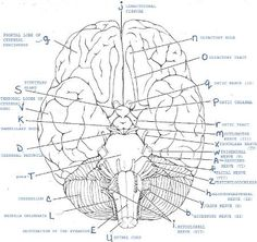Printables. Anatomy And Physiology Worksheets