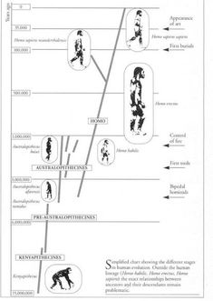 1000+ images about Hominid evolution on Pinterest