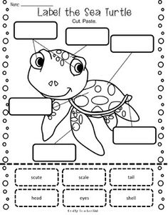 Printables, Turtles and The turtles on Pinterest