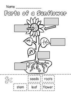 Diagram For Poem, Diagram, Free Engine Image For User
