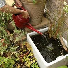 Belfast Sink Pond For Frogs To Keep Slugs Away Home Pinterest