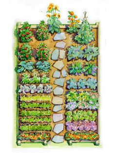 6 Flowers To Grow In The Vegetable Garden Flowers In The