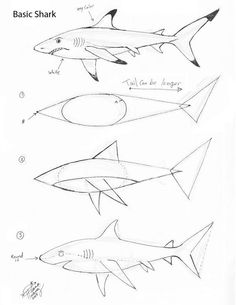 Learn how to draw a Great White Shark through an easy step