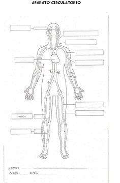 imagenes de rompecabeza a color del cuerpo humano de 6