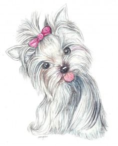 Yorkie, Coloring pages and Free printable coloring pages