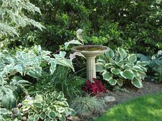Hosta Astilbe And Ferns Great Shade Garden Plants! From