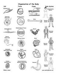 Mammals, Badger and Dichotomous key on Pinterest