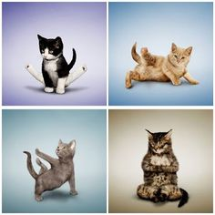 chair exercise gif couch and set 1000+ images about cats doing yoga on pinterest | yoga, cat