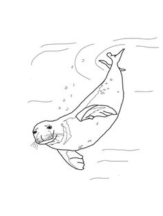 How to Draw a Seal, Step by Step, Sea animals, Animals