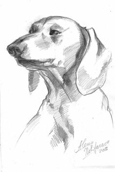 1000+ images about My DACHSHUND sketches on Pinterest