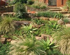 Water Wise Indigenous South African Garden WESTHOUSE & GARDEN