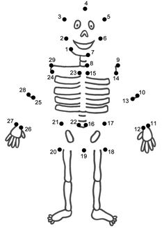 1000+ images about human body/skeleton unit on Pinterest
