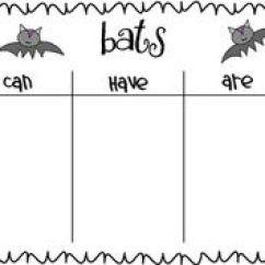 Stellaluna Venn Diagram Activity External Wastegate 1000+ Images About Bat Loves The Night On Pinterest | Bats, Kindergarten Blogs And Chalk Talk