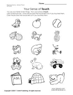 1000+ images about My 5 senses... preschool on Pinterest